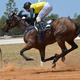Equine Inflammation