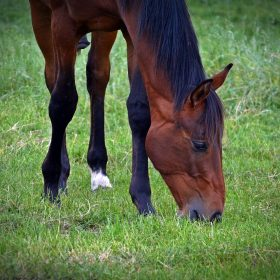 image of horse in field