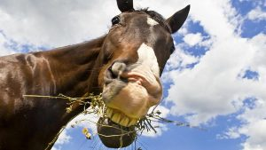 Deal With Your Horse's Poor Eating Habits