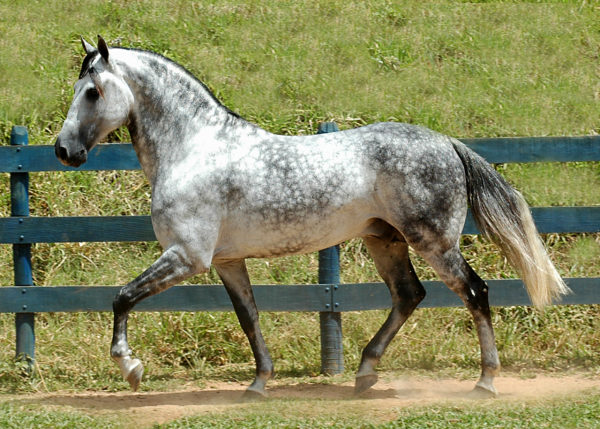 how to clean your grey horse