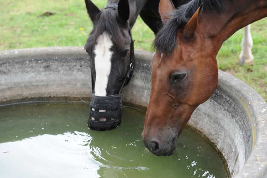 Five Simple Ways to Keep Your Horse Hydrated