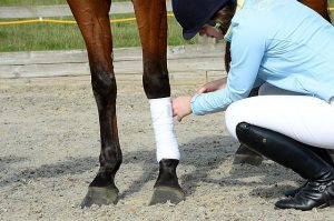 First Aid for Horse Owners