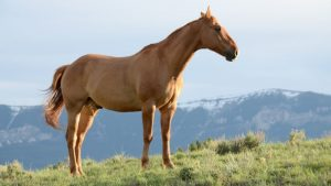 Image of a brown horse