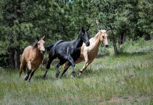 image of three horses running