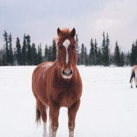 Image of horse with snow