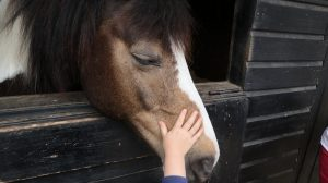 image of horse being pat