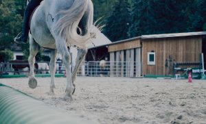what are acupressure ting points on a horse