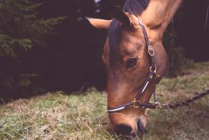 benefits of organic apple cider vinegar for horses