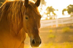 how leg saver can benefit horse health