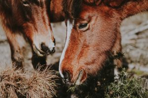benefits of slow feeding a horse
